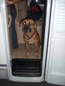 Ein Hund im Wohnmobil ist die beste Alarmanlage die es gibt